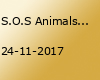 S.O.S Animals Morocco 2017